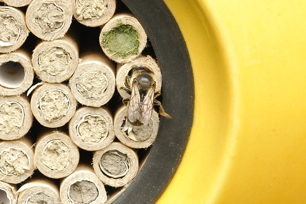Beepalace with full nesting tubes and a leafcutter bee.